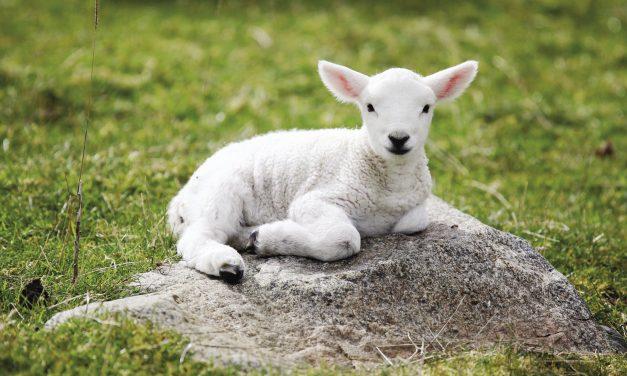 L'orgueil et l'humilité – Soyons doux et humble de coeur